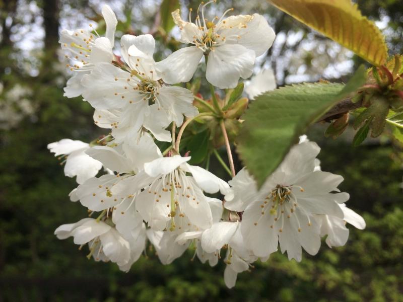 contact blossoming gardens garden design
